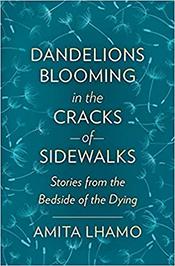 DandelionsBlooming