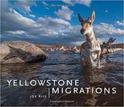 YellowstoneMigration